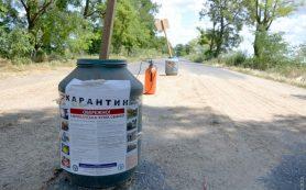 Вспышка Африканской чумы в Одесской области: сожжены 258 свиней
