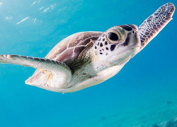 Опухоли морских черепах оказались похожи на человеческий рак