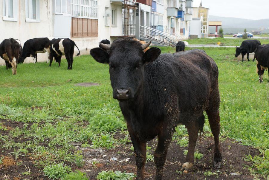 В Усть-Катаве обстановка по бешенству стабильна