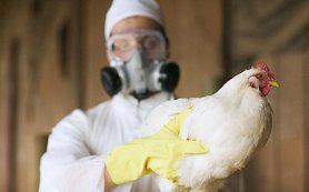 Вирус птичьего гриппа выявили на фермах в Самарской области