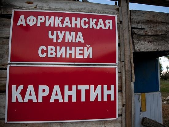 В Волгоградской области свиньи опять заболели африканской чумой