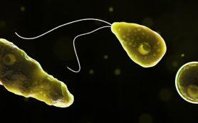 Жуткие паразиты, которых люди подцепили на отдыхе.