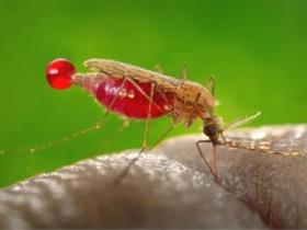 Ученые: Ликвидация малярийных комаров никак не изменит экосистему