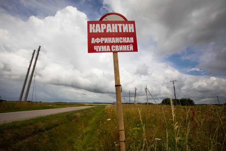 В Калининградской области у границы с Литвой произошла вспышка АЧС