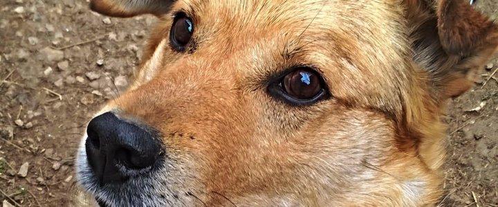 В Калуге объявлен карантин по чуме плотоядных животных