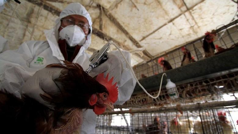 В Чувашской Республике выявлен птичий грипп