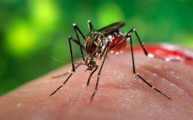 «Жёлтая лихорадка и вирус Зика»: В Крыму нашли комара-переносчика опасных инфекций