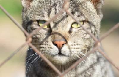Медики рассказали, чем опасны для человека кошки