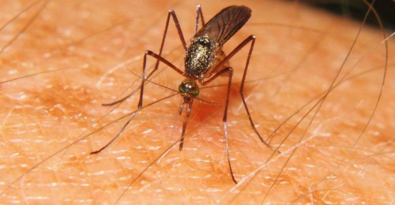 Россиян предупредили о росте случаев заражения вирусом Западного Нила в Канаде