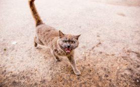В Ярославле бешенством заболела домашняя кошка: где обнаружили смертельный вирус