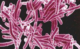 Изобретено принципиально новое лекарство от туберкулеза