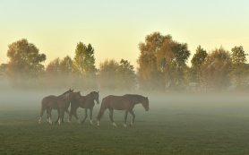 В Бурятии лошадей проверили на вирус