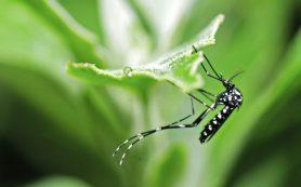 Малярия — рекомендации ВОЗ и лечение