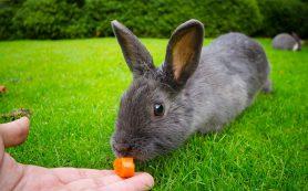 Болезни органов пищеварения у кроликов