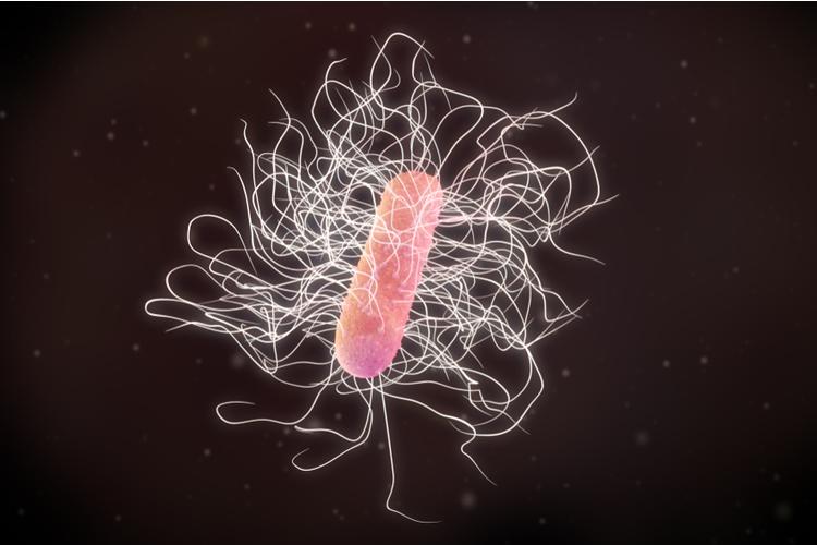 Больничная бактерия утерла нос креационистам