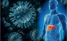 Гепатит В: описание