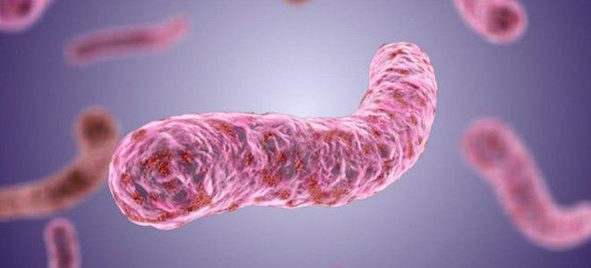Симптомы вируса гепатита Е и его лечение