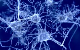 Озвучена новая теория возникновения новой коронавирусной инфекции
