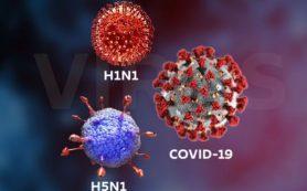 Отличие коронавируса от гриппа и ОРВИ – какие симптомы расскажут о типе вируса?