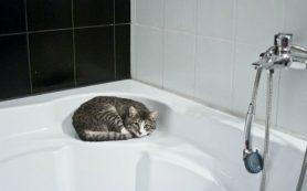 Есть вопрос: можно ли принимать ванну при простуде