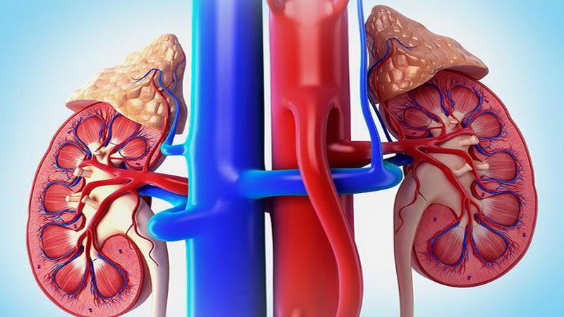 Пиелонефрит: симптомы и признаки опасной болезни почек