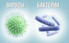 Вирус или бактерия?