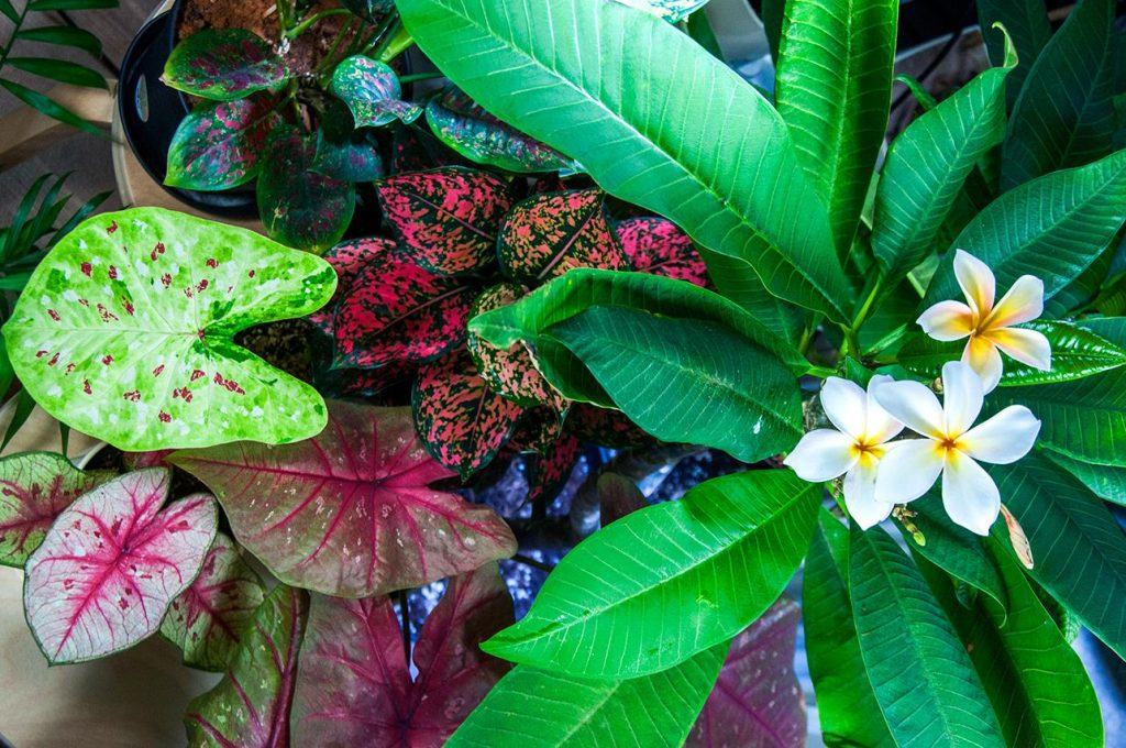 Тропическое растение показало мощные противовоспалительные свойства