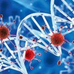 Вирусы: друзья или враги?