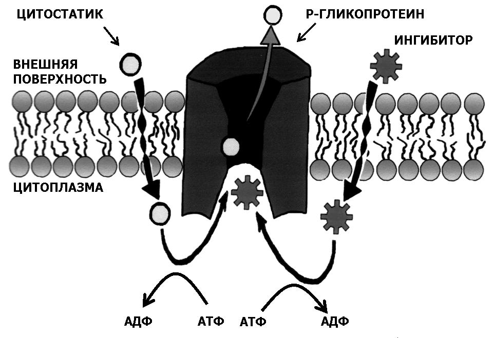 Лекарства для лечения опухоли — цитостатики